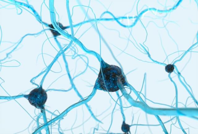 肌の敵、活性酸素は細胞を傷つける